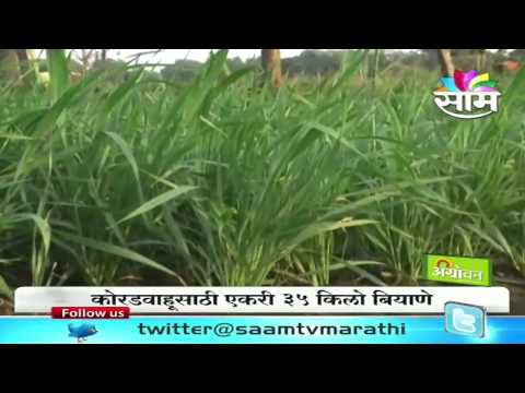 Tips on how to take care of wheat (Gahu)