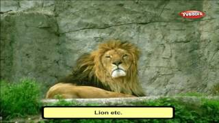 Cbse 4th CBSE SCIENCE | Animal & Their Young ones |  NCERT | CBSE Syllabus | Animated Video