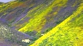 Pyar Ka Hota Hai [Full Song] (HD) - Aashique Mastane