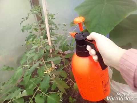 Обработка томатов и огурцов в теплице борной кислотой