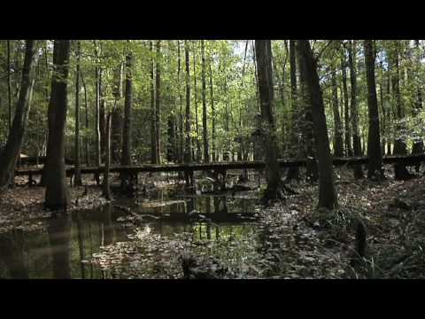 Congaree National Park, South Carolina -teaser trailer