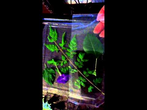 Adorno de plastico y Flores naturales