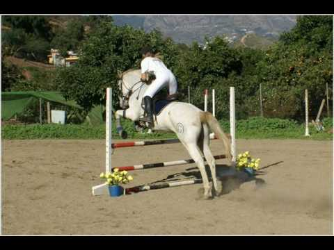 The Ulimate Horse Jumping Training Guide………