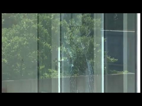 Raw: Elk Wanders Into German Office Building