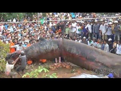 Haiwan ajaib disebalik taufan Haiyan melanda vietnam :(topbodybuildingsupplement.blogspot.com)