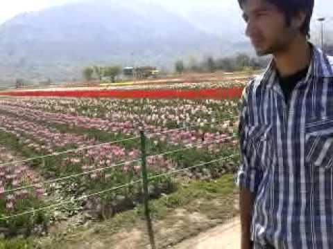 Tulip Garden of Srinagar Kashmir