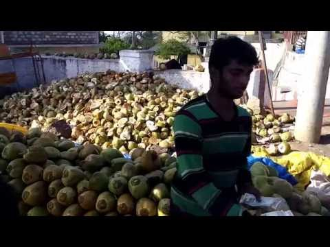 Mysore India Fresh Coconut Water Drink December 2015