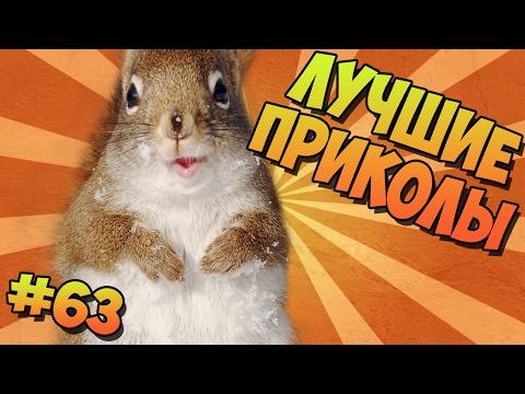 ЛУЧШИЕ ПРИКОЛЫ #63 ВЕСЁЛЫЕ БЕЛОЧКИ