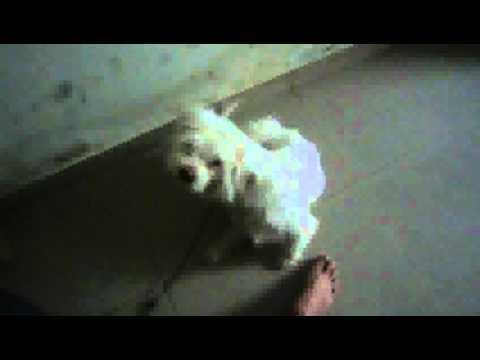 Man's Feet Vs Dogy's Feet video