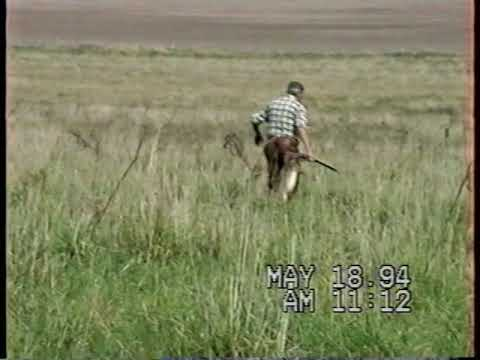caza perdiz y liebre.avi