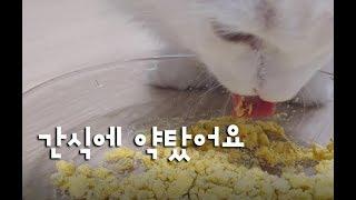 좋아하는 간식에 약을탔어요 과연? 약먹는 귀여운고양이동영상