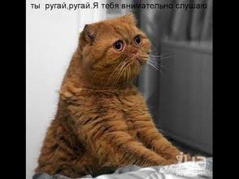 Кто Нагадил! Видео про кота