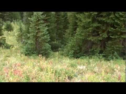 Black bear encounter on trail + ptarmigan returning from the summit of Mount Blakiston