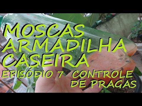 ARMADILHA FÁCIL E CASEIRA PARA ELIMINAR MOSCAS COMUNS E DA FRUTA!