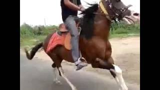 Horse Vs Bike Racing