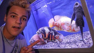 BUYING EXOTIC FISH for My Friend!!