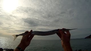 Shore Fishing - Float Fishing for Garfish - Tips and Tactics