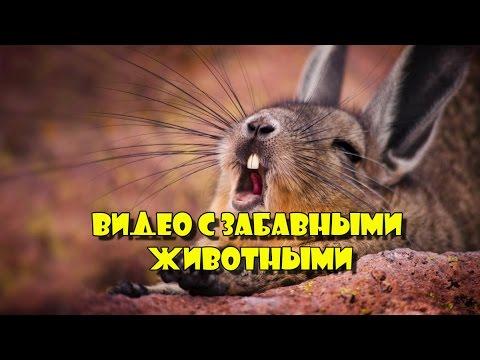 ВИДЕО С ЗАБАВНЫМИ ЖИВОТНЫМИ № 2. 2017 год.