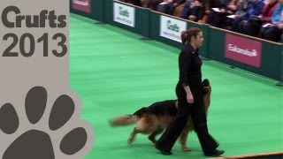 Obedience Dog Championships - Day 3 - Crufts 2013 (Jenny Gould & Zankanja Bitter 'N' Twisted)