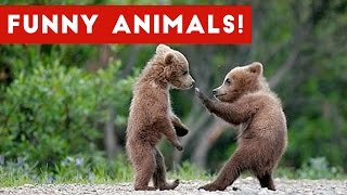 Funniest Animal Clips, Moments & Bloopers of November 2016 Weekly Compilation | Funny Pet Videos