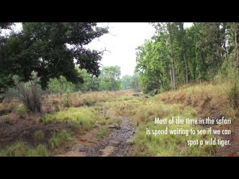 Wildlife India, Tiger Safari Kanha Forest HD ( Telugu )