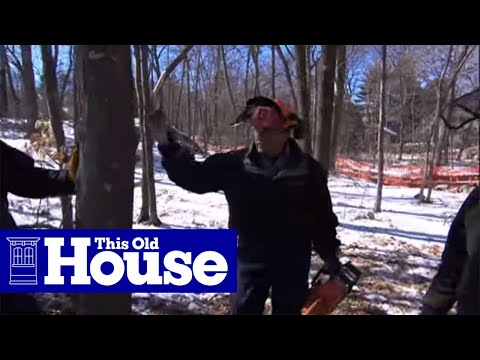 How To Cut Down A Tree Safely - This Old House video