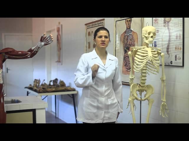 Artes - Anatomia e Fisiologia Humana - Letícia Gramázio - Unidade I