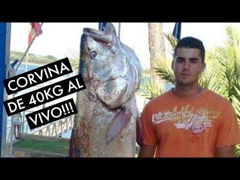 Corvina de 40 kilos capturada al vivo !