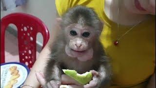Baby Monkey | The Happy Evening Of Doo's Family | Doo Loves Guava
