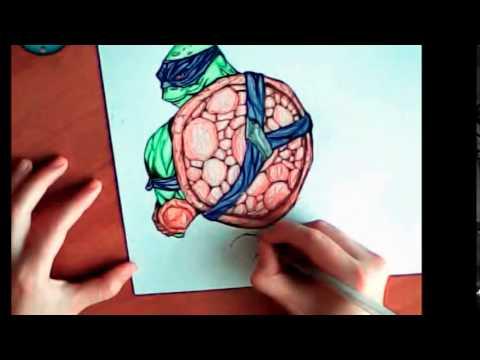 Игры рисовать черепашек