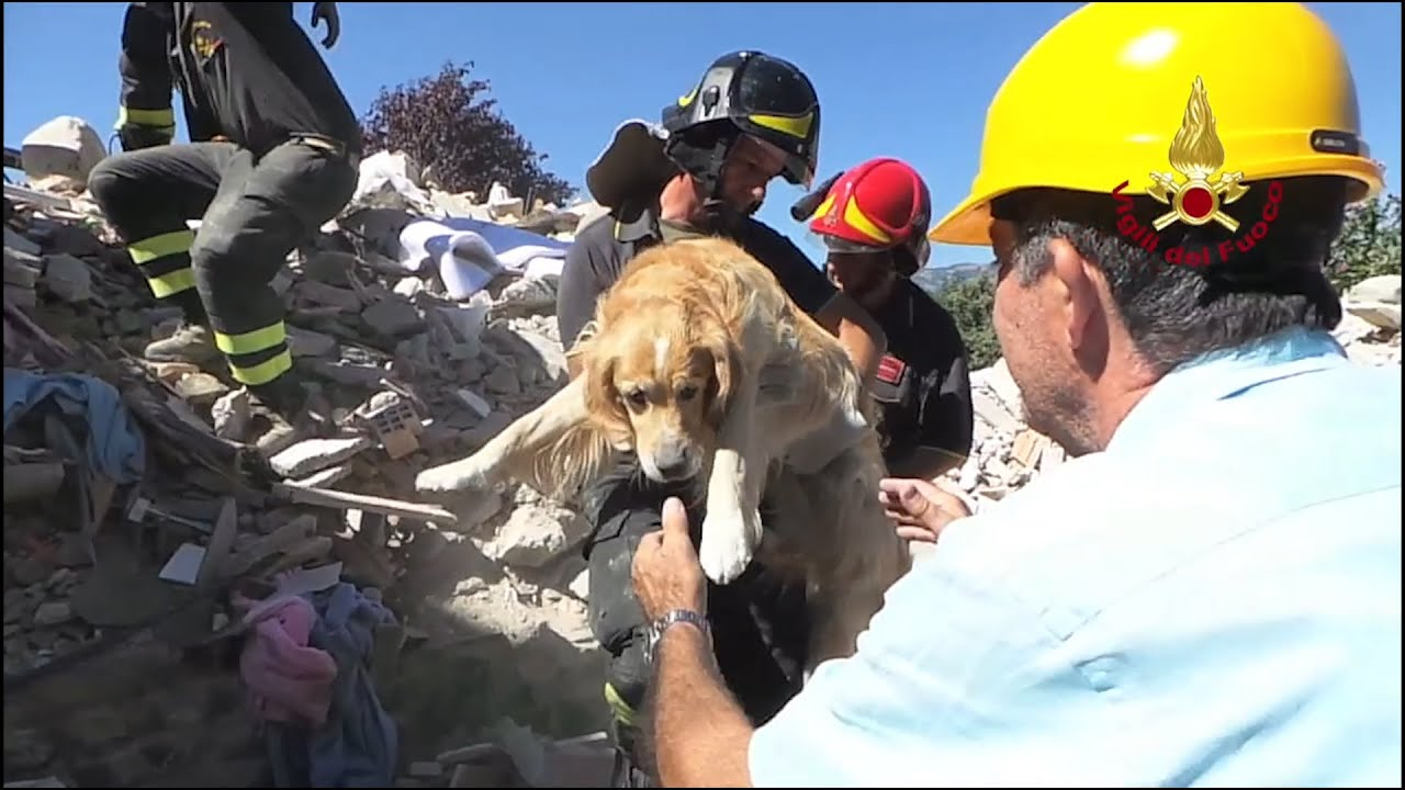 Amazing Moment Dog Is Rescued From The Rubble Ten Days After Earthquake In Italy