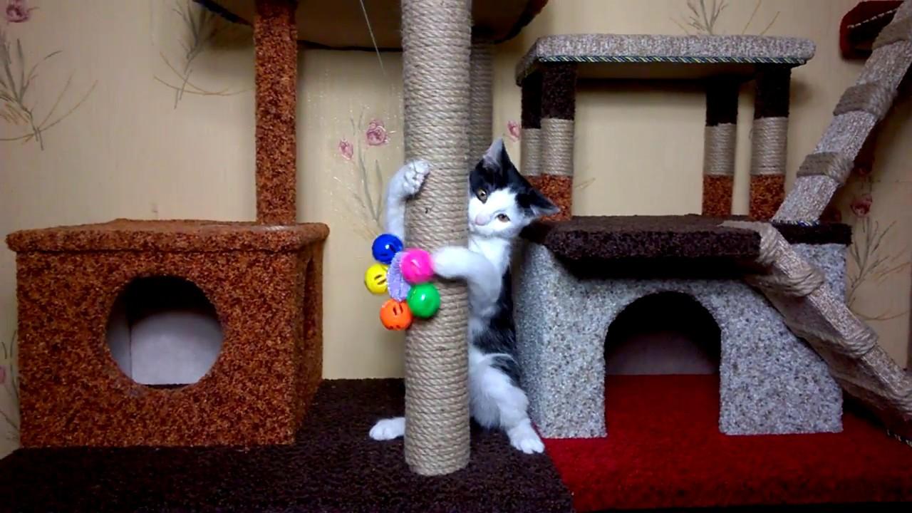 Как легко сделать домик для кота