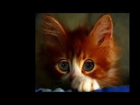 бутусов чашка кошка слушать белье отлично