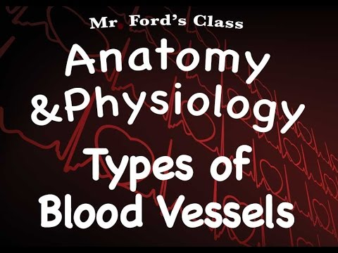 Cardiovascular System: Types of Blood Vessels (14:09)