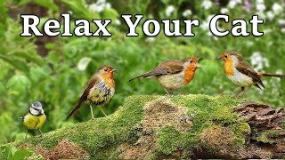 Calming Videos for Cats - TV to Relax Your Cat and My Cat at Home : The Bird Garden