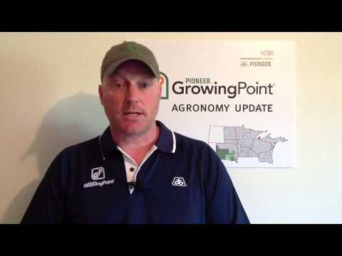 Crop Update and Checking Corn Pollination in South Dakota