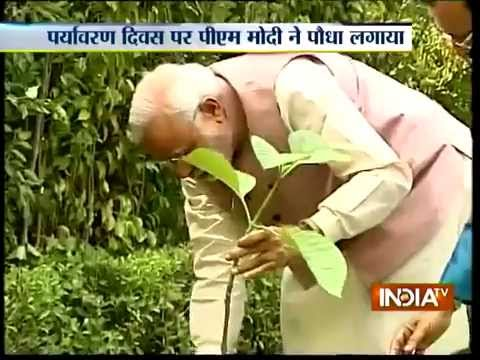 PM Modi Plants a Tree on World Environment Day - India TV