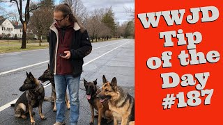 What Would Jeff Do? Dog Training Tip of the Day #187 Leash Reactivity