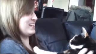 Super Funny Cats React To Kisses - Very Funny Animals reactions Vine compilation.