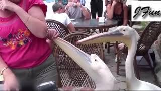 Animals Funny Videos
