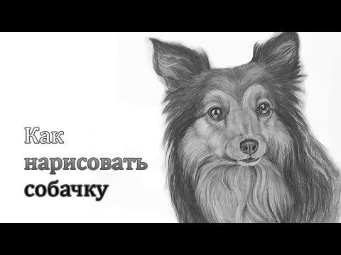 Видео как нарисовать лицо собаки