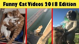 Funny Cats Video Complication 2018 (Cats and Kittens)