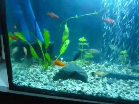 Filtro casero para acuario youtube for Filtros para estanques de peces caseros