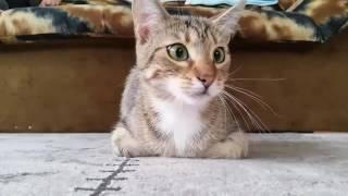 ホラー映画を見た猫のびっくりリアクションが可愛すぎる♪