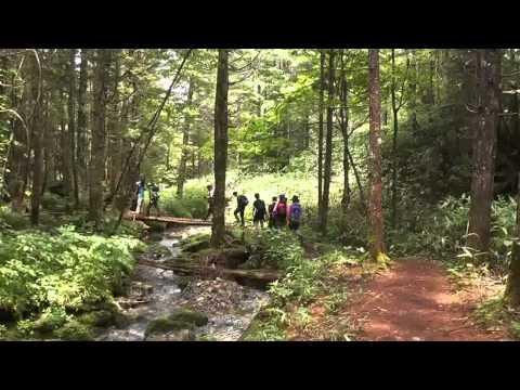 高山市 「乗鞍山麓五色ヶ原の森」 ~シラビソコース~