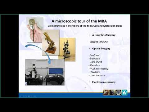 Coffee Time Talk : A Microscopic Tour of the MBA