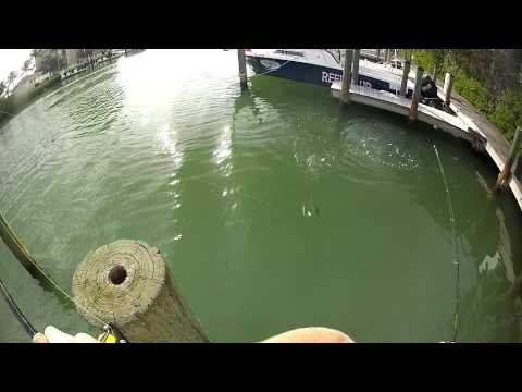 Snook Fishing The Docks