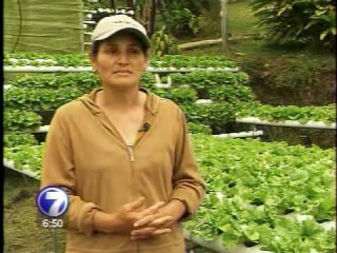 Una mujer encontró  un negocio millonario en la hidroponía
