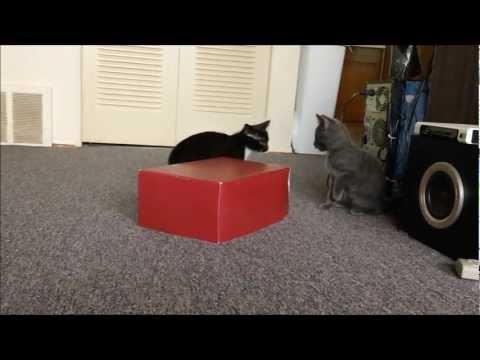 Котята играют с коробкой