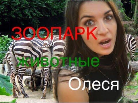 Московский зоопарк. Экскурсия/прогулка/болтовня